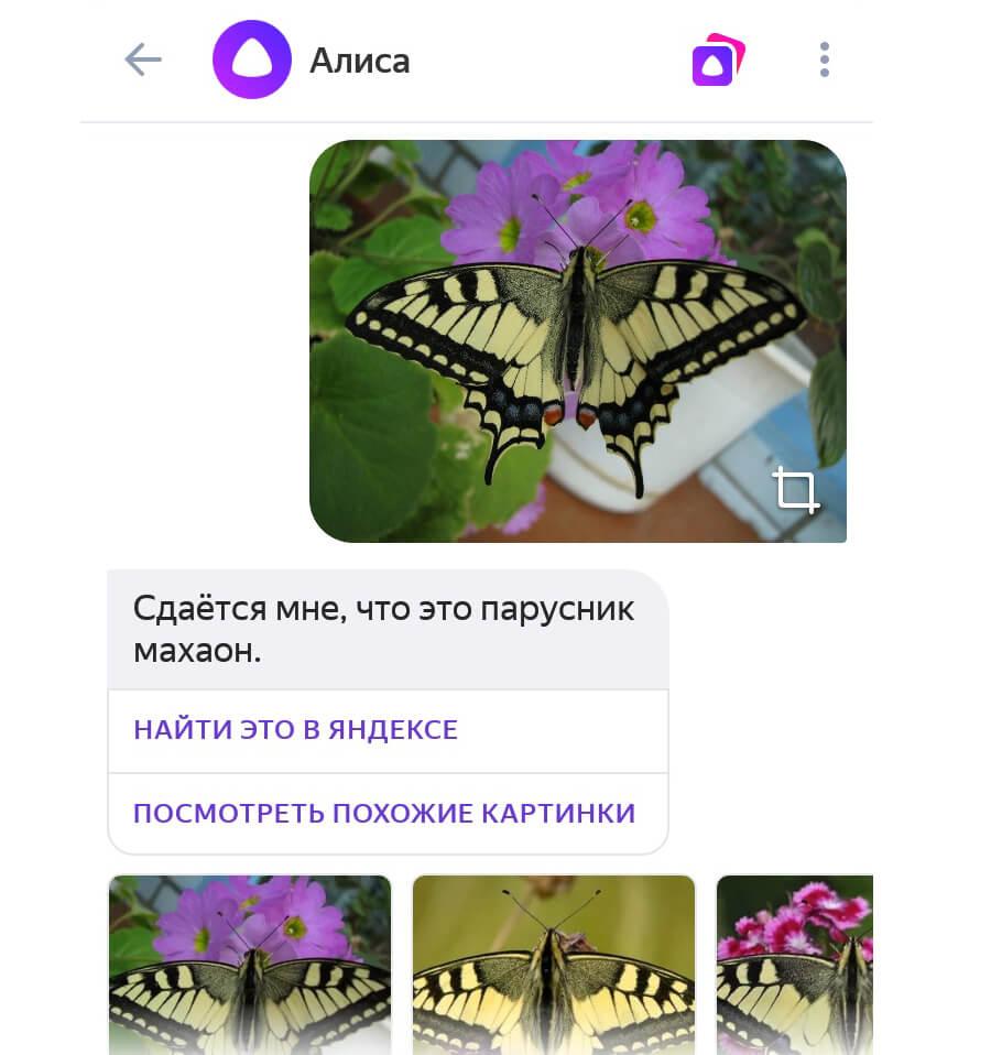 Поиск по фотографии через Алису